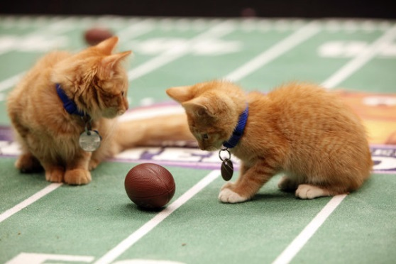 Hallmark Channel Kitten Bowl on DISH